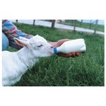 Lamb Feeder Excal Topper Each